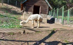 Sarajevski zoo vrt: Sve je spremno za dolazak niskih temperatura
