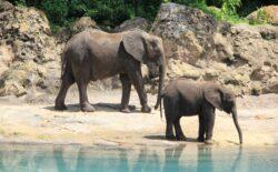 Nacionalni park u Keniji ima čak 200 mladunaca slonova, u decembru ih očekuju još